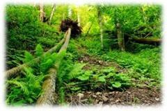 jtpedersen_fallen tree_consulting_skills (2)