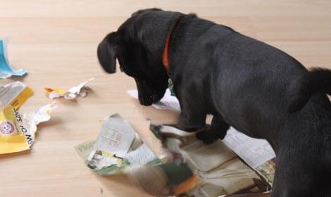 jtpedersen_321 Ignite_dog_email_organize 470