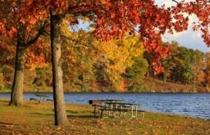 16155314-picnic-area-in-kensington-metro-park-michigan
