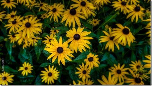Torben-Photography-Yellow-Flowers-16x9.jpg