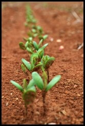 Sewing Seeds_JT Pedersen_321 Ignite_Target Marketing_Good Dirt