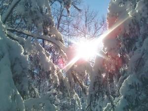 the Invincible Heart ZuZu 112311  first snow 1201011218a (1)