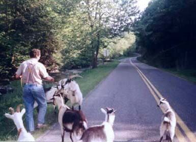 Henry_Walking_Goats_FoxCreek_edited-1