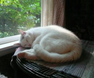 Catnapping Kiki Aug 9, 2009