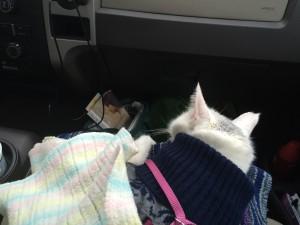 Kiki loved riding in the truck