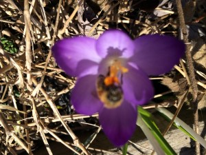 Bees fly in on April breezes