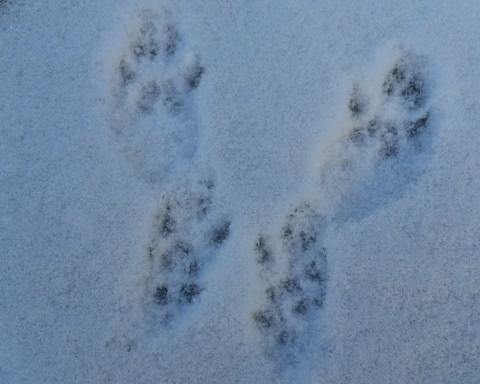 snowprint 2016
